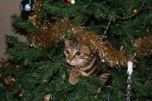 クリスマスツリーに居るねこ
